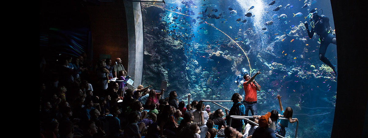 CAS Staff talking to a crowd and pointing to a diver in their large aquarium