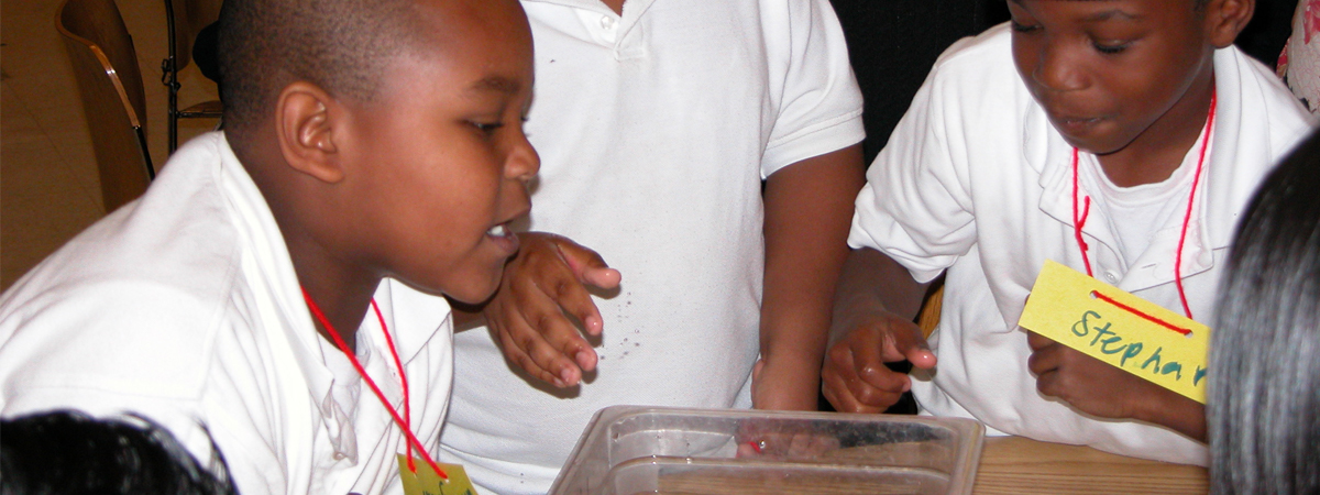 Three boys investigating marine life in a container